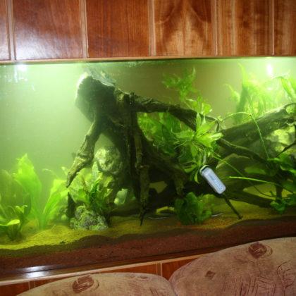 Aquarium / 2010