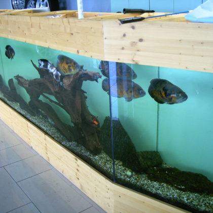 Aquarium / 2006